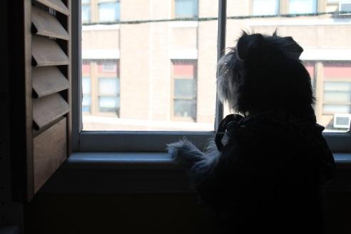 theuglyvolvo dog open letter 1