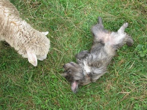 theuglyvolvo dog open letter 5