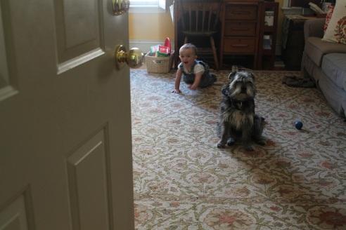 theuglyvolvo dog open letter 9